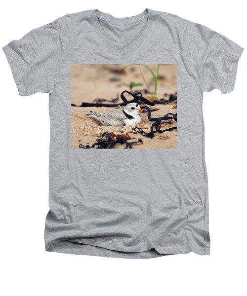 Piping Plover Men's V-Neck T-Shirt