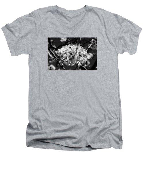 Plum Blossoms Men's V-Neck T-Shirt by Steven Clipperton