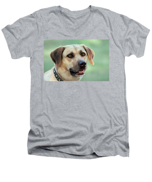 Portrait Of A Yellow Labrador Retriever Men's V-Neck T-Shirt