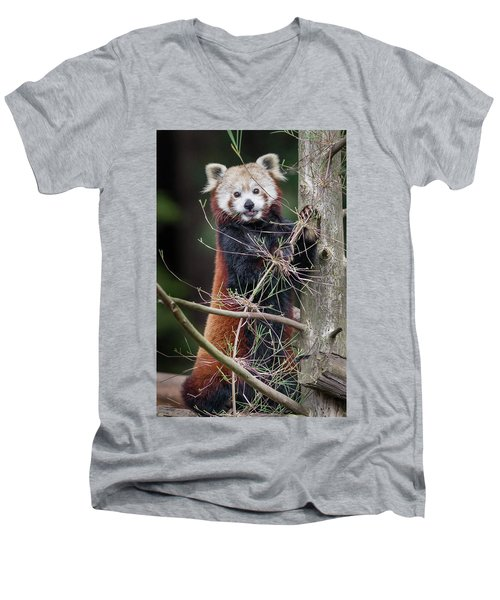 Portrat Of A Content Red Panda Men's V-Neck T-Shirt by Greg Nyquist