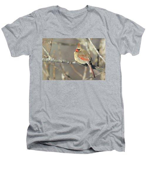 Pretty Female Cardinal Men's V-Neck T-Shirt by Brook Burling