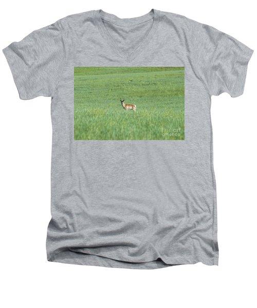 Pronghorn In A Sea Of Green Men's V-Neck T-Shirt