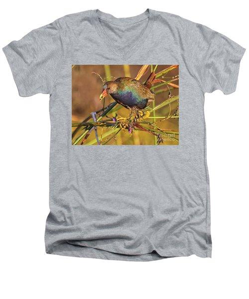 Purple Gallinule With A Treat Men's V-Neck T-Shirt by Myrna Bradshaw