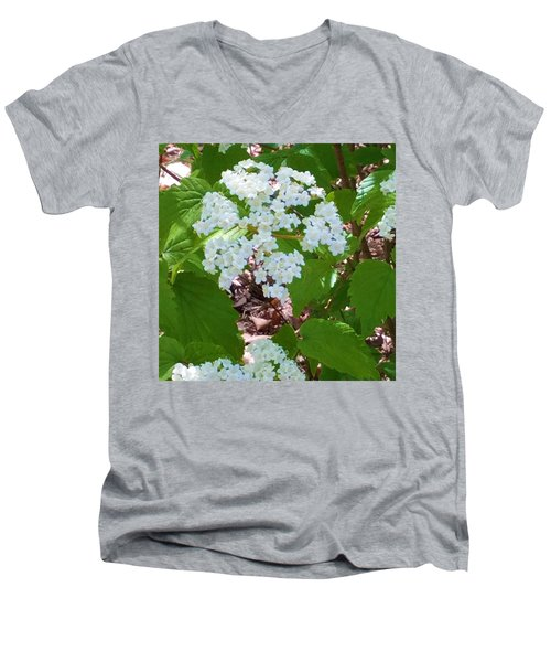 Queen Anne's Lace Men's V-Neck T-Shirt by Kay Gilley