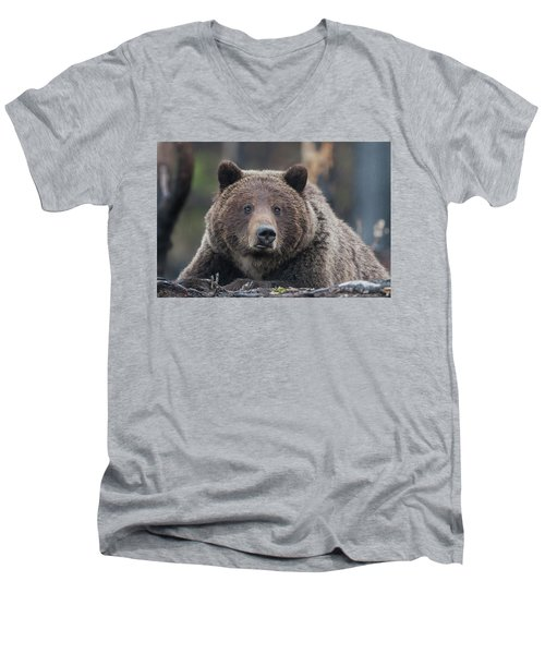 Raw, Rugged And Wild- Grizzly Men's V-Neck T-Shirt