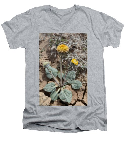 Rayless Daisy Men's V-Neck T-Shirt by Jenessa Rahn