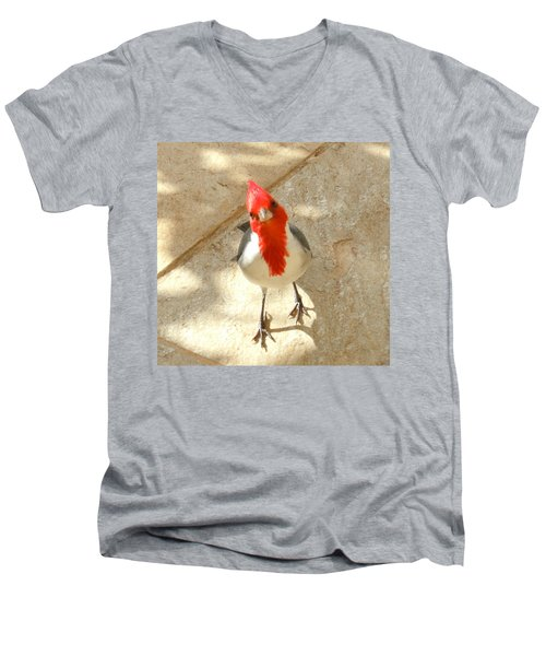 Red-crested Cardinal At My Feet Men's V-Neck T-Shirt