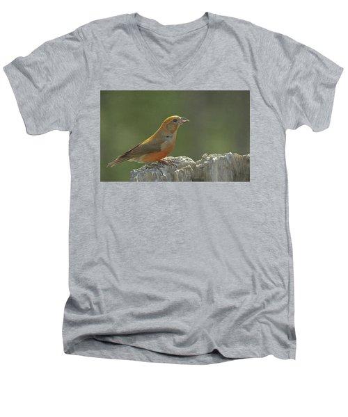 Red Crossbill Men's V-Neck T-Shirt