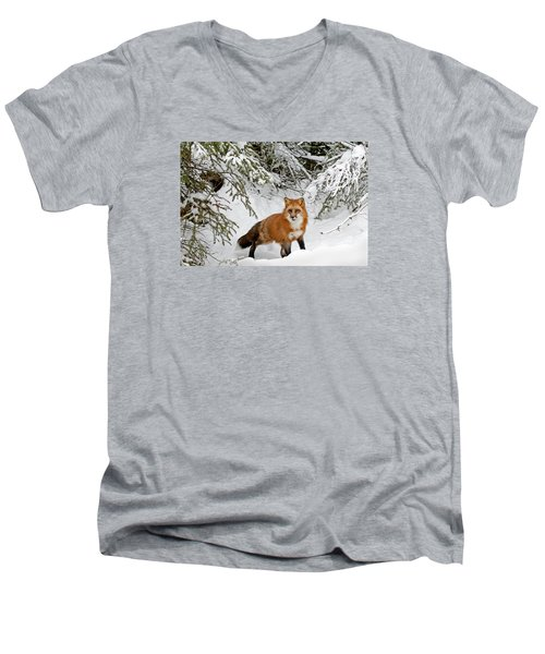 Red Fox In Winter Men's V-Neck T-Shirt