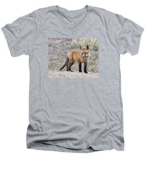 Red Fox Kit Men's V-Neck T-Shirt