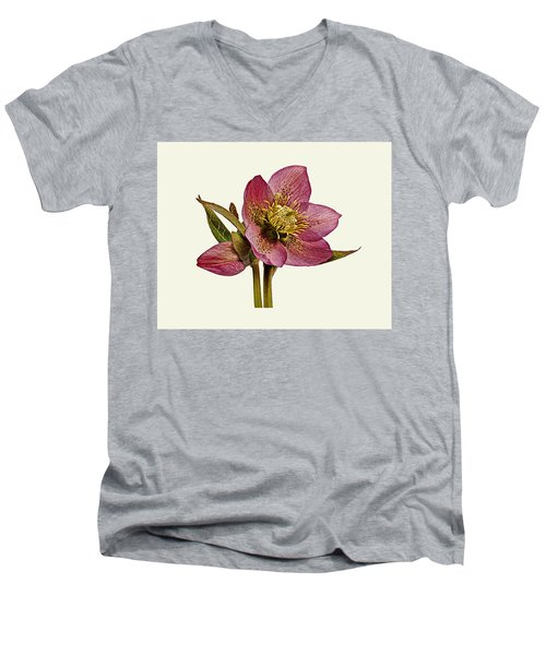 Red Hellebore Cream Background Men's V-Neck T-Shirt