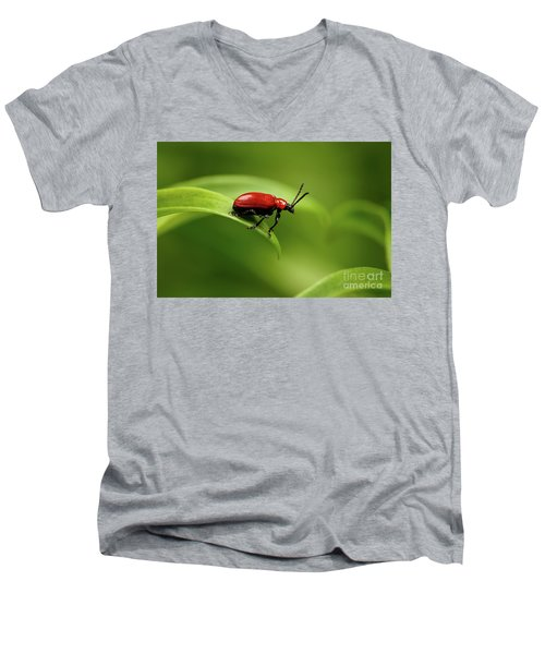 Red Scarlet Lily Beetle On Plant Men's V-Neck T-Shirt by Sergey Taran