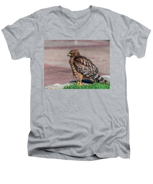 Red-shouldered Hawk Men's V-Neck T-Shirt by Martina Thompson