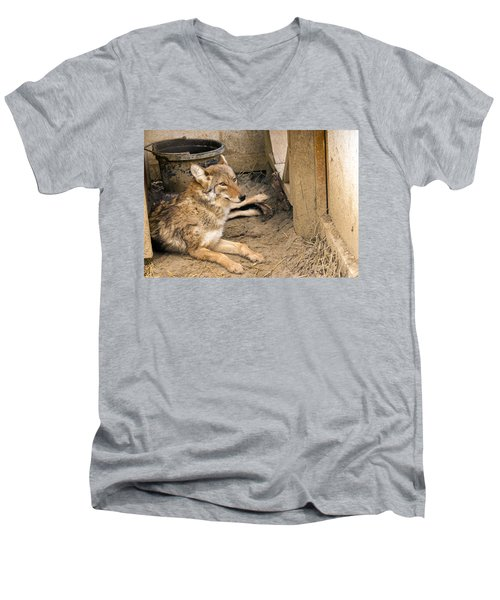 Resting Coyote Men's V-Neck T-Shirt