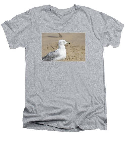 Men's V-Neck T-Shirt featuring the photograph Ring-billed Gull by Heidi Poulin