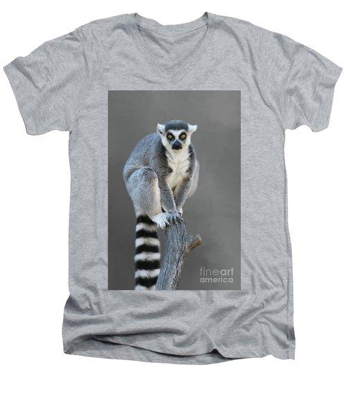 Ring-tailed Lemur #6 V2 Men's V-Neck T-Shirt