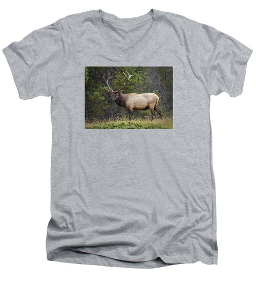 Rocky Mountain National Park Bull Elk Men's V-Neck T-Shirt