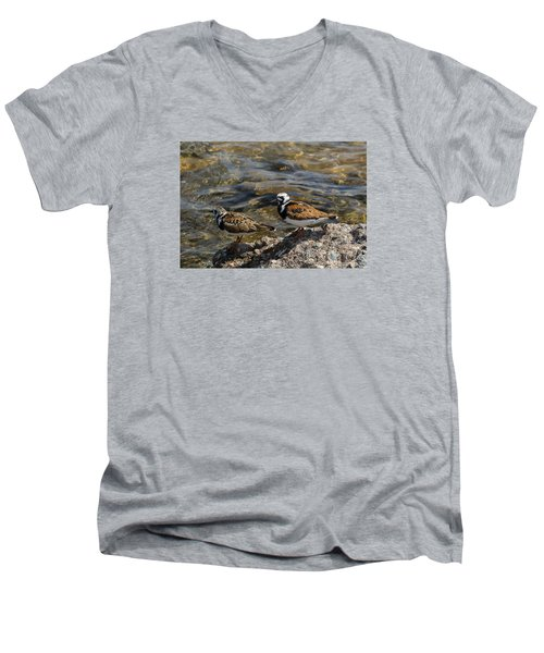 Ruddy Turnstone Men's V-Neck T-Shirt