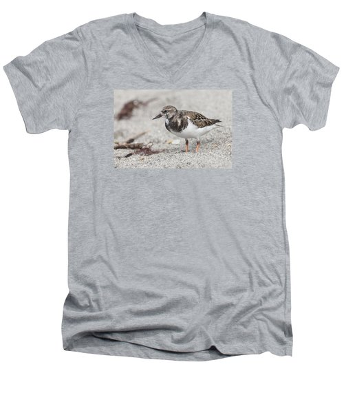 Ruddy Turnstone On The Beach Men's V-Neck T-Shirt