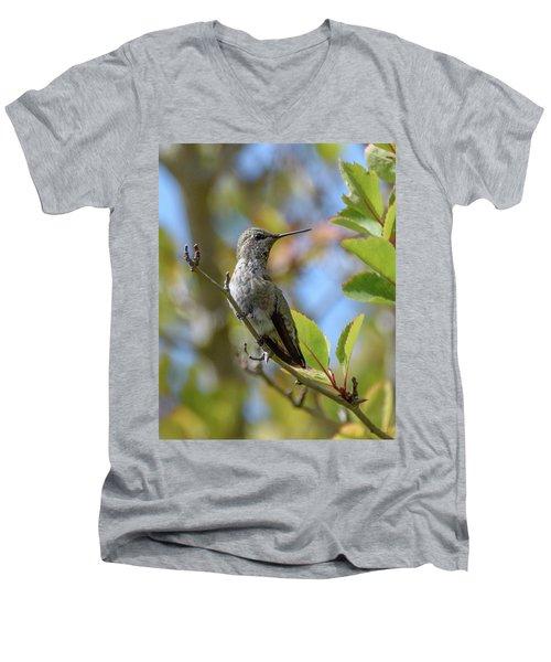 Rufous Hummingbird Men's V-Neck T-Shirt by Keith Boone