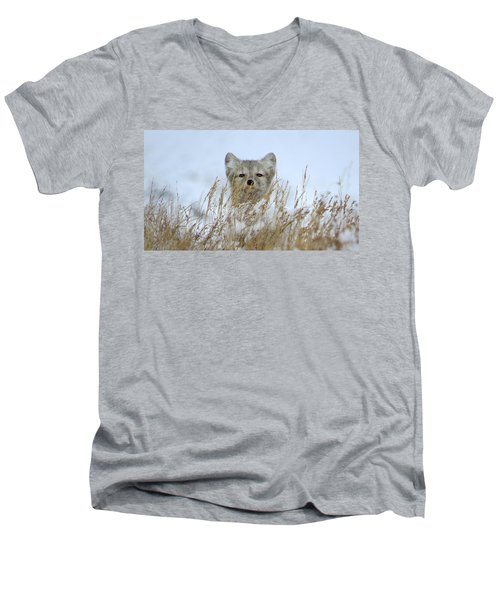 Sachs Harbour Fox Men's V-Neck T-Shirt