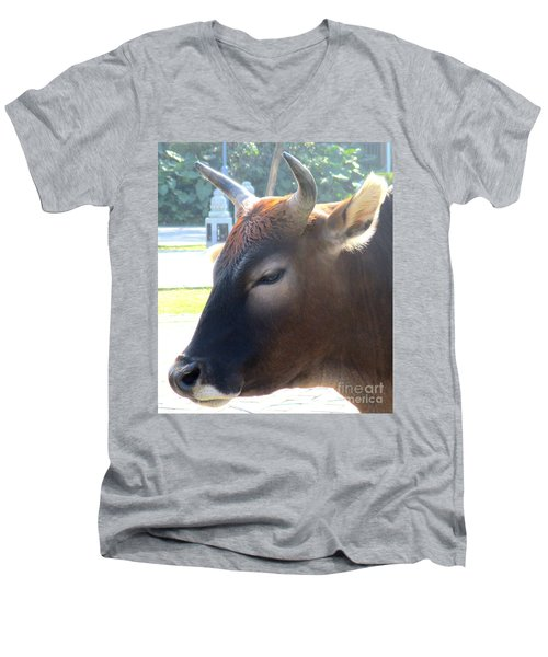 Men's V-Neck T-Shirt featuring the photograph Sacred Cow 4 by Randall Weidner