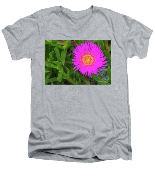 Sally-my-handsome Succulent Flower - Carpobrotus Acinaciformis Men's V-Neck T-Shirt by Jivko Nakev