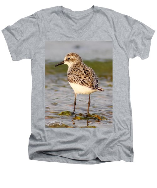 Sandpiper Portrait Men's V-Neck T-Shirt