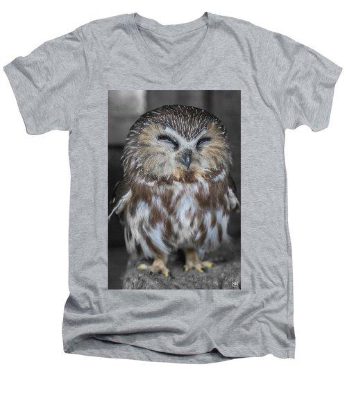 Saw Whet Owl Men's V-Neck T-Shirt