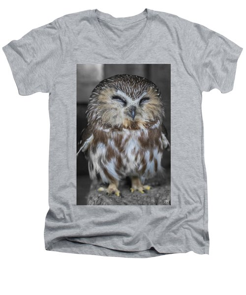 Saw Whet Owl Men's V-Neck T-Shirt