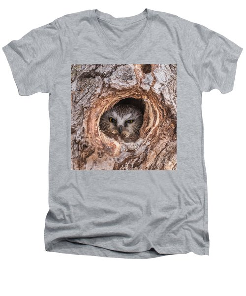 Saw-whet Secret Men's V-Neck T-Shirt by Yeates Photography