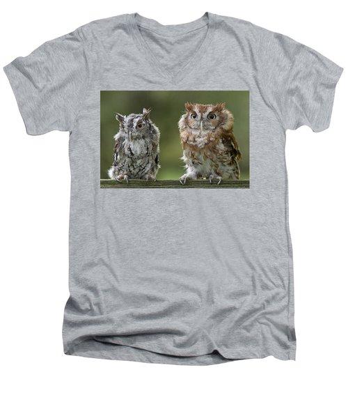 Screech Owl Pair Men's V-Neck T-Shirt