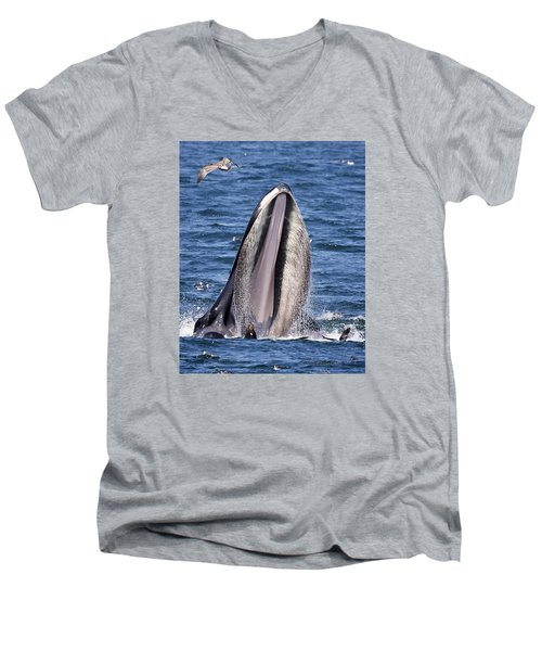 Sea Lions Are Friends, Not Food Men's V-Neck T-Shirt