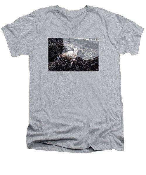 Seagull And Mussels Men's V-Neck T-Shirt by Melinda Saminski
