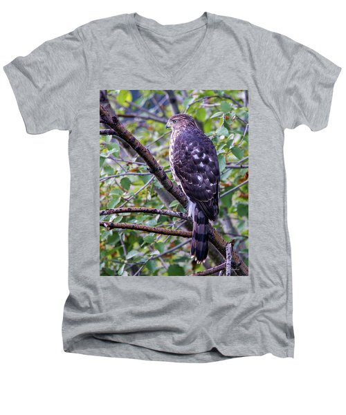 Men's V-Neck T-Shirt featuring the photograph Sharp-shinned Hawk by Tim Kathka