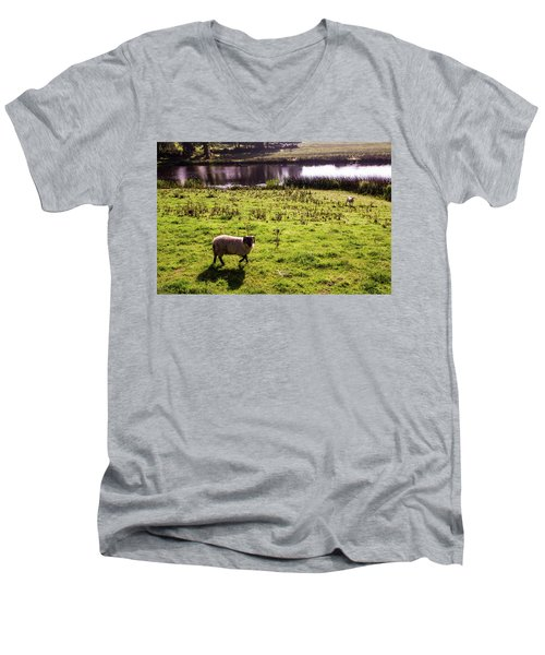 Sheep In Eniskillen Men's V-Neck T-Shirt