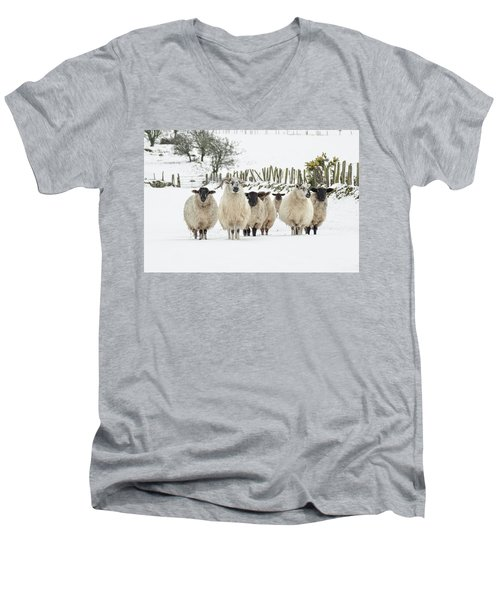 Sheep In Snow Men's V-Neck T-Shirt