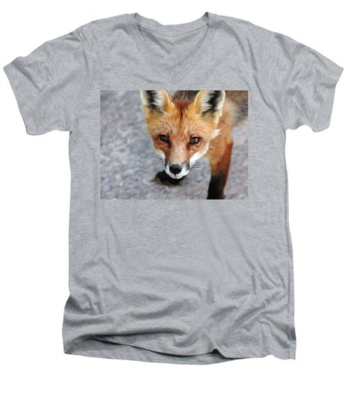 Men's V-Neck T-Shirt featuring the photograph Shy Red Fox  by Debbie Oppermann