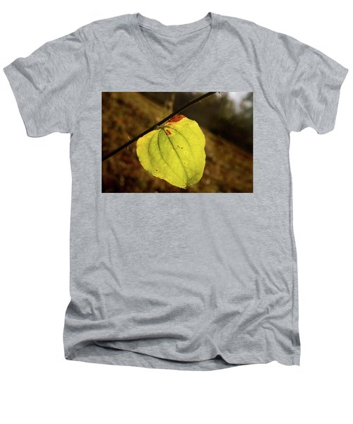 Single Greenbrair Leaf In Evening Sun Men's V-Neck T-Shirt