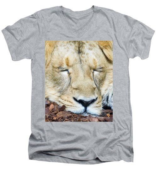 Men's V-Neck T-Shirt featuring the photograph Sleeping Lion by Colin Rayner