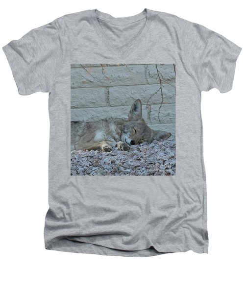 Men's V-Neck T-Shirt featuring the photograph Sleepy Li'l Coyote by Anne Rodkin