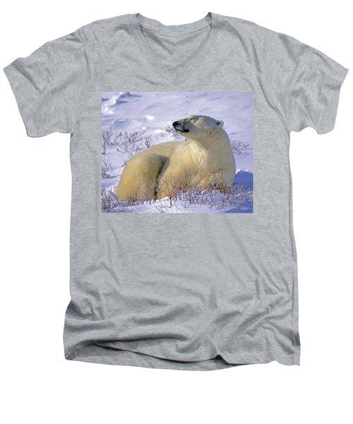 Sleepy Polar Bear Men's V-Neck T-Shirt