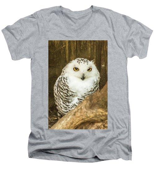 Snow Owl Men's V-Neck T-Shirt