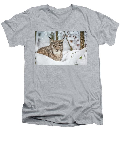Snowy Lynx Men's V-Neck T-Shirt