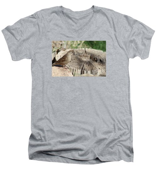 Song Sparrow Looks Curious Men's V-Neck T-Shirt
