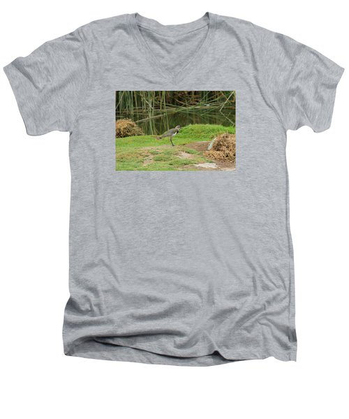 Southern Lapwing On Shore Men's V-Neck T-Shirt by Robert Hamm