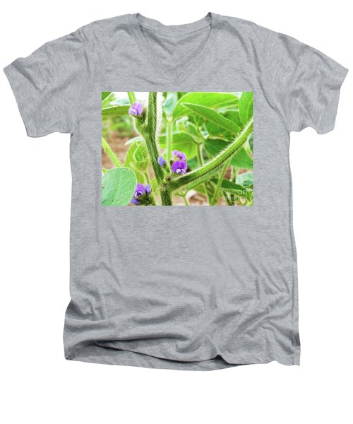 Soybean  Men's V-Neck T-Shirt