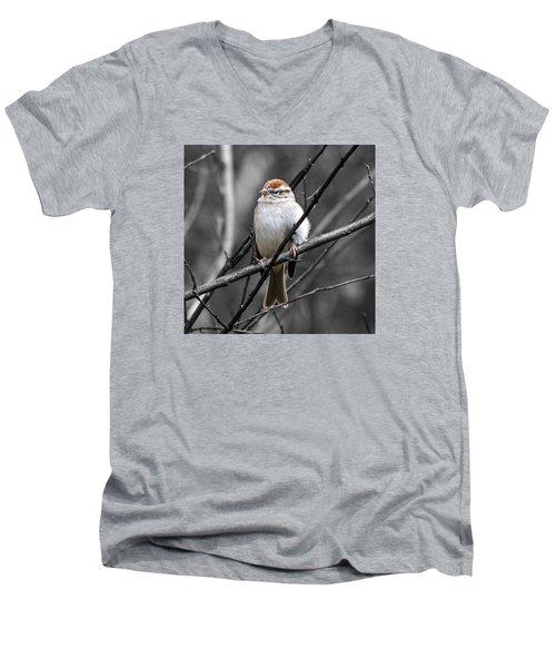 Sparrow Men's V-Neck T-Shirt by Paul Wilford
