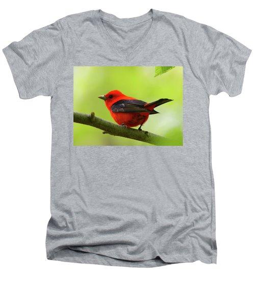Spring Flame - Scarlet Tanager Men's V-Neck T-Shirt