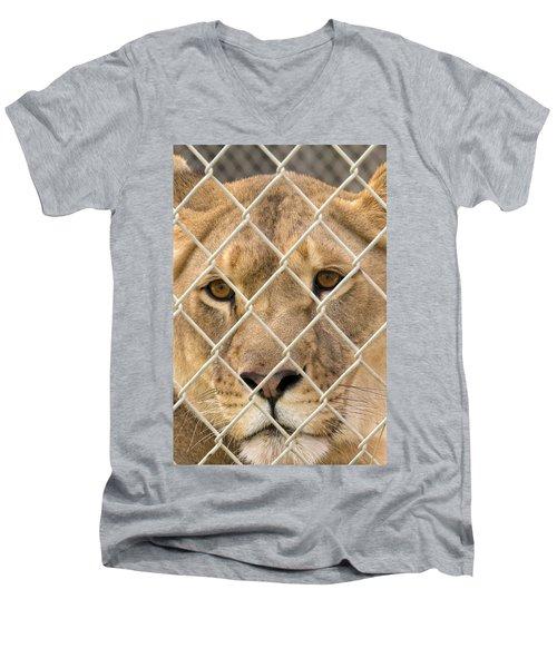 Staring Lioness Men's V-Neck T-Shirt
